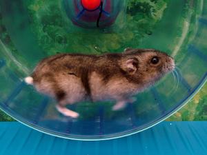 Hamster Wheel 20150311